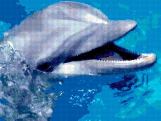 Улыбка дельфина, предпросмотр