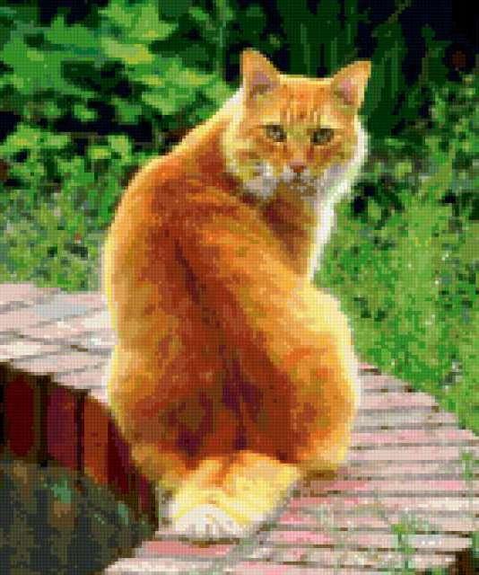 Рыжий кот, предпросмотр