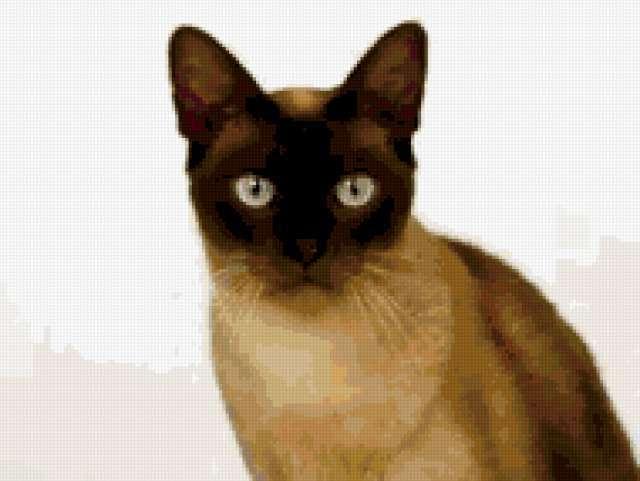 Сиамская кошка, кошки