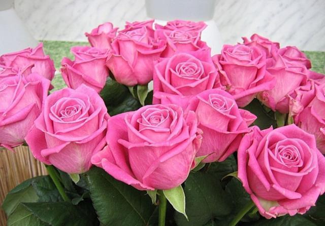 Розовые розы,