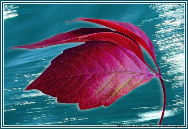 Осенний лист на ветру,