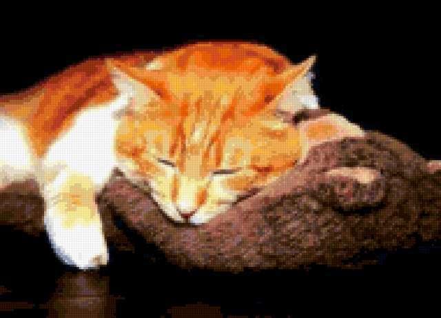 Спящий кот, предпросмотр