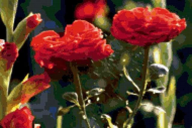 Розы в паутине, предпросмотр