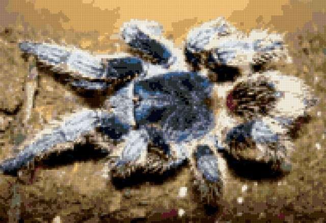 Красивый паук, предпросмотр