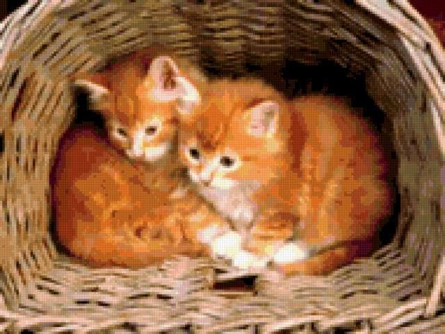 К схеме вышивки «Котята в