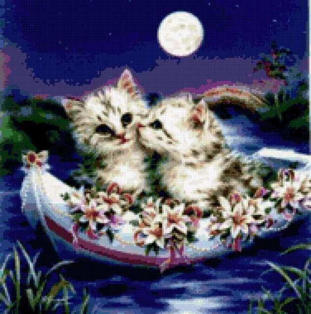 котята, ночь, небо, луна