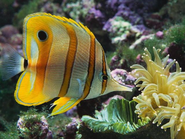 Подводный мир, океан, море,