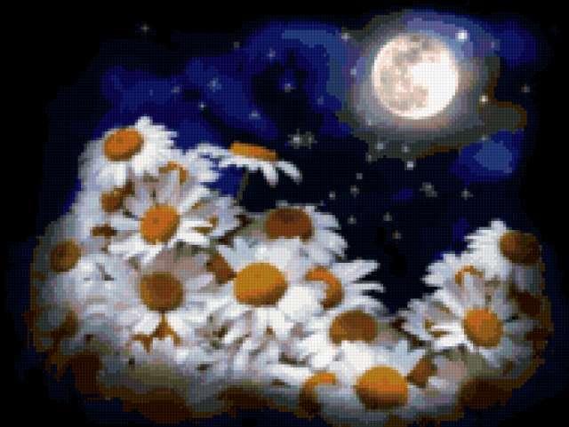Ромашки на фоне звездного неба