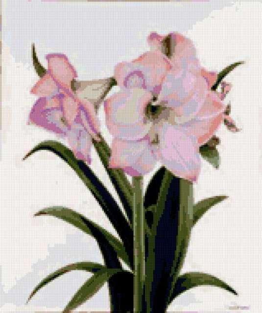 Светло-розовые лилии