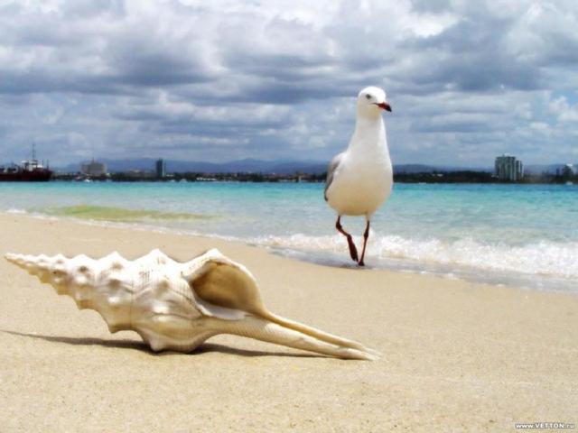 Чайка, чайка, птица, море,