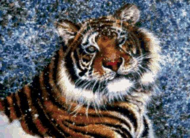 Тигр в снегу, предпросмотр