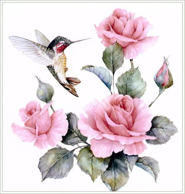Колибри и розы, колибри,