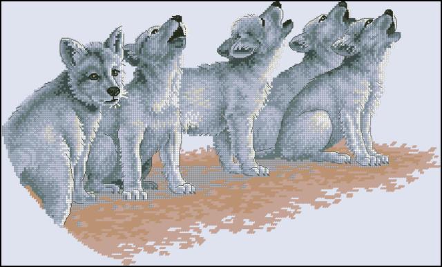 Волчата, волчата, волки