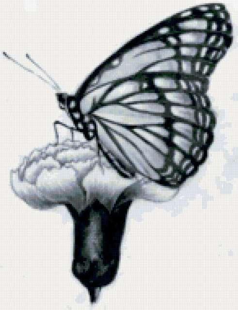 Бабочка на гвоздике, цветы,