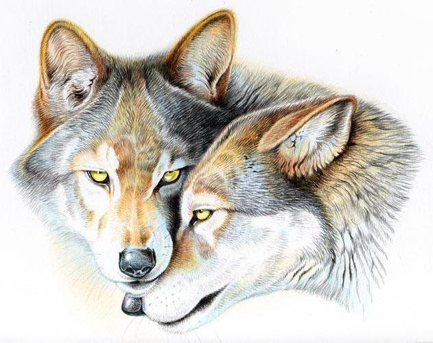Чувства, волки, звери