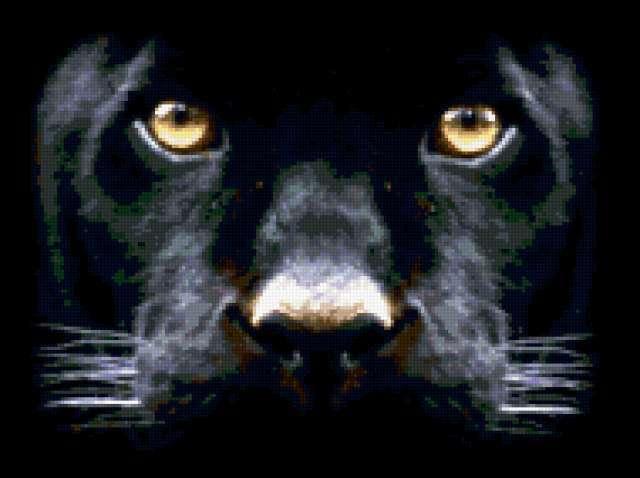 Взгляд пантеры, предпросмотр