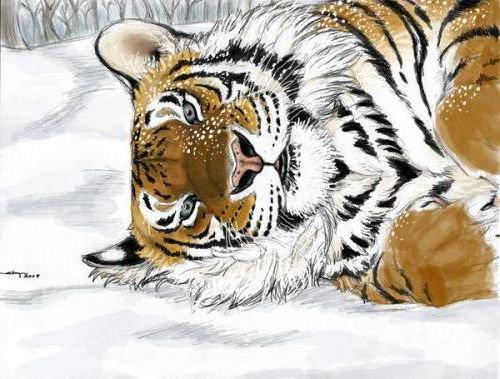 Тигр на снегу, оригинал