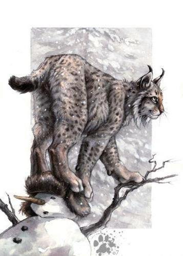 Рысь на дереве, дикие кошки,
