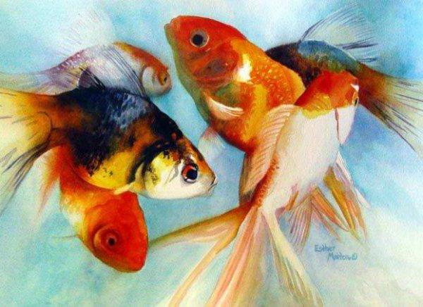 Золотая рыбка, золотая рыбка
