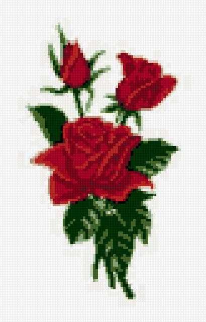 Маленькая розочка, роза