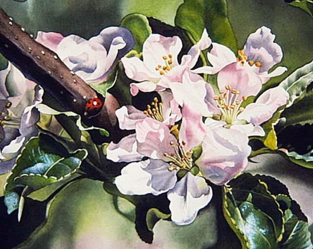 Яблоневый цвет, цветок, яблоня