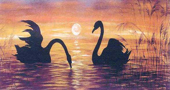 Черные лебеди, лебеди