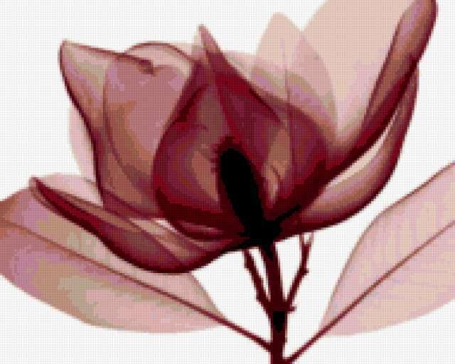 Modern Decoration - Magnolia