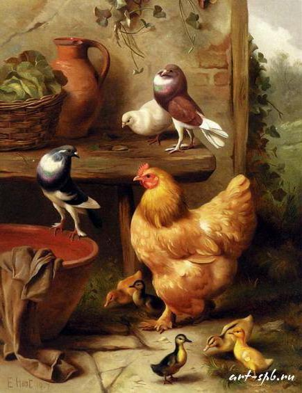 Курица, голубка, голуби и