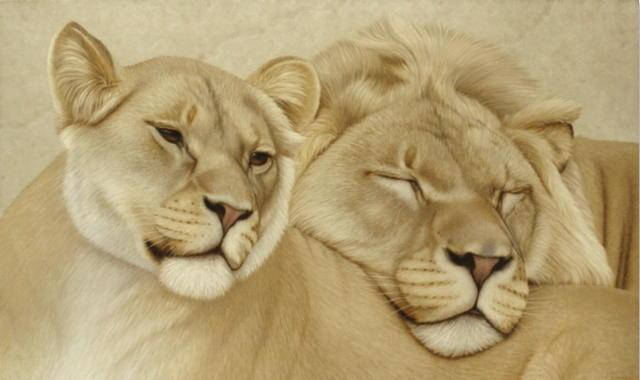 Лев и пума, львы, пума,
