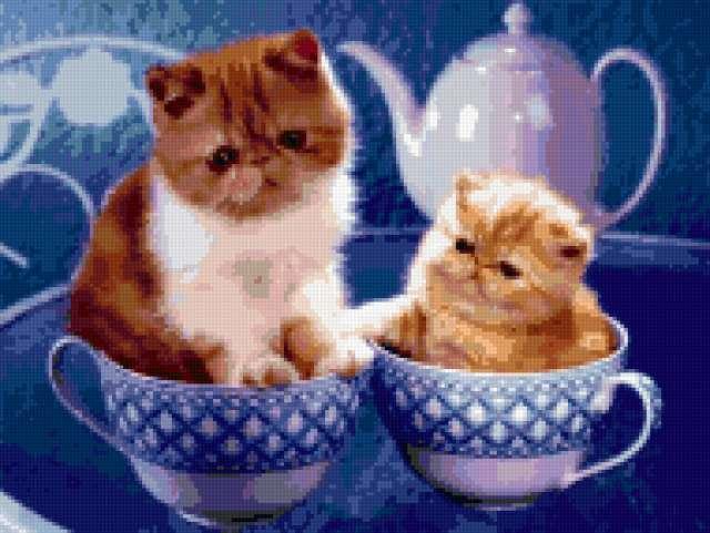Чайная пара, котята, кошки,