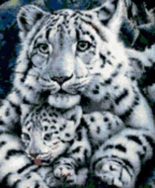 Семья, животные, тигр
