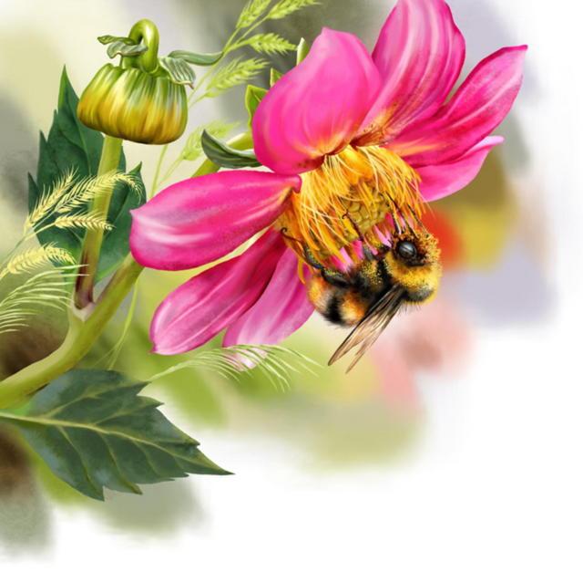 Шмель на цветке, оригинал