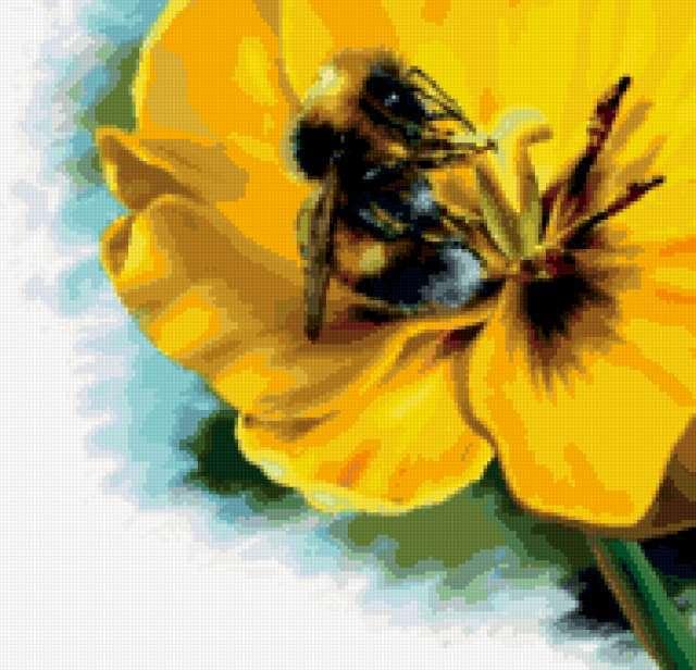 Шмель на цветке, предпросмотр
