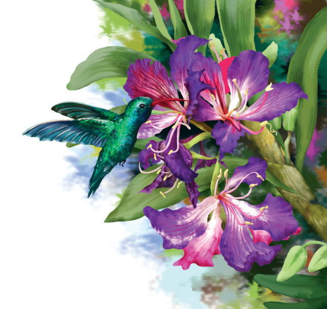 Колибри на цветке, птицы,