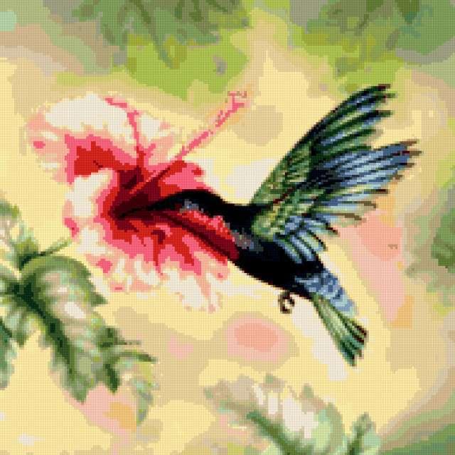 Колибри и гибискус