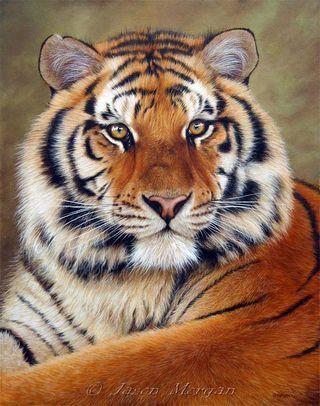 Амурский тигр, тигр, животные