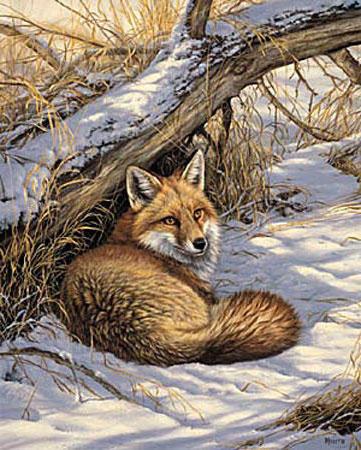 Лиса, лиса, лисичка, животные,