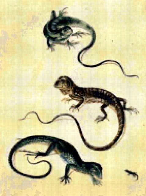 Ящерицы, предпросмотр
