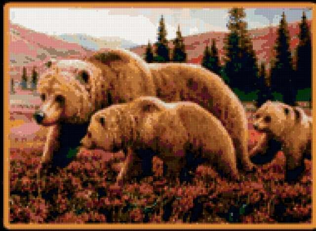 Семья медведей, медведи
