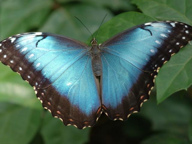 Бирюза, бабочки