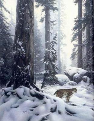 Зимний лес, пейзаж, зима,
