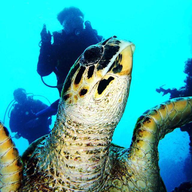 Черепаха 2, море, вода,