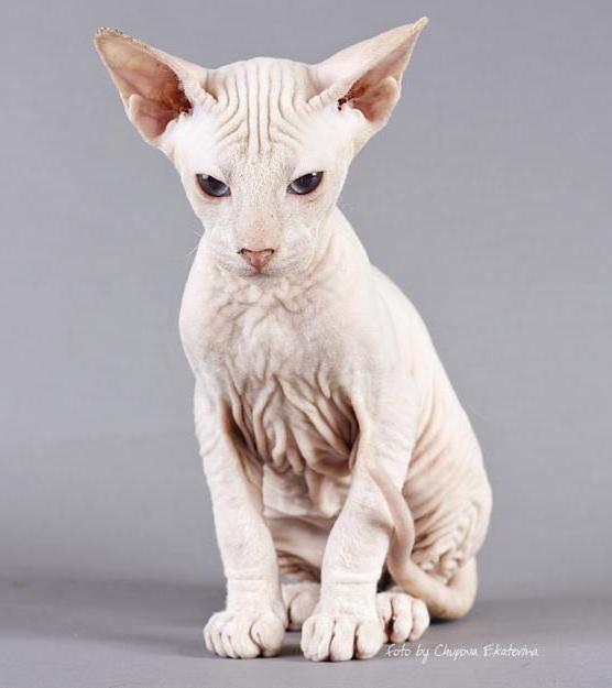 Египетская кошка 2, оригинал