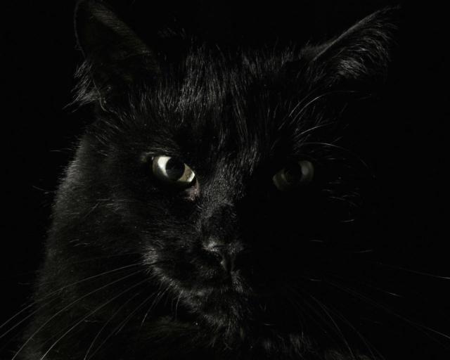 Черный кот, животные