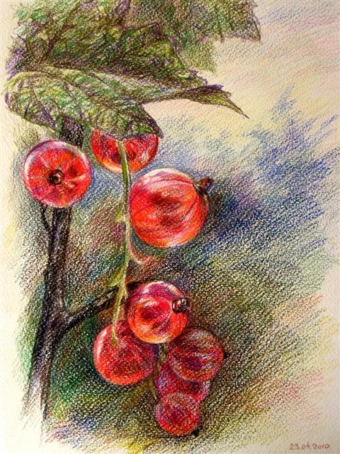 Ветка красной смородины