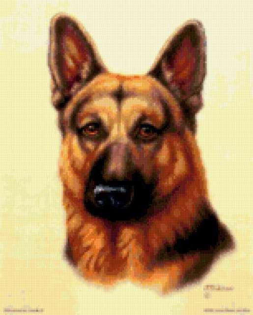 Немецкая овчарка, собака
