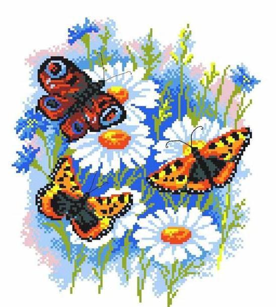 Бабочки и ромашки, цветок,