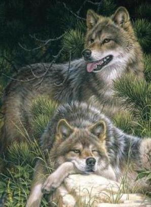 Пара волков, оригинал