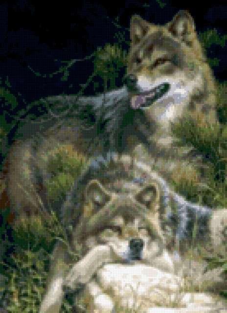 Пара волков, животные