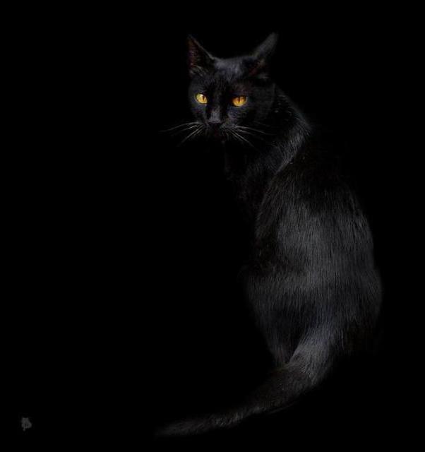 Черная кошка в черной комнате,
